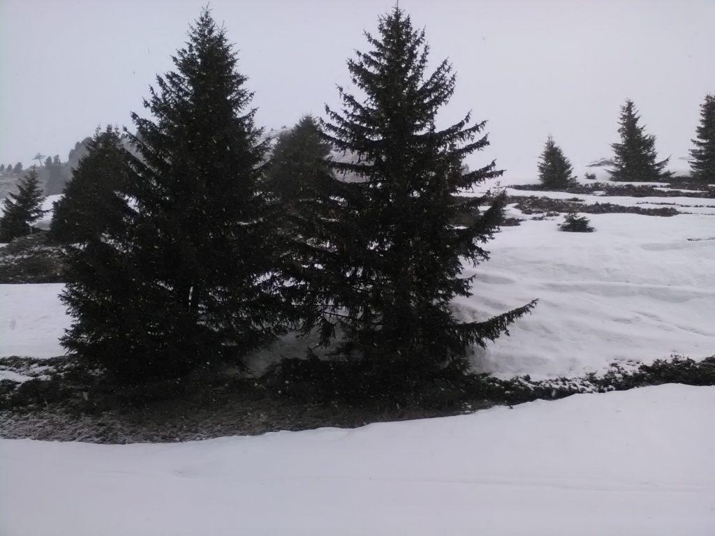 Zwillinge im Schnee