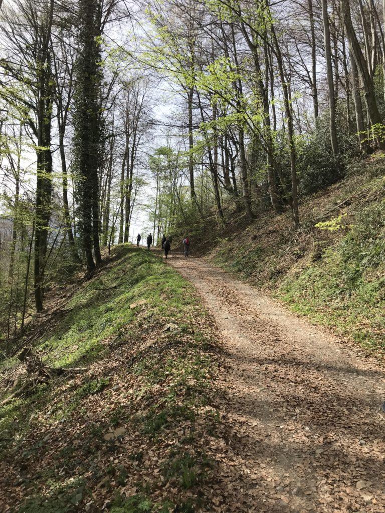 sanfter Aufstieg durch den Wald