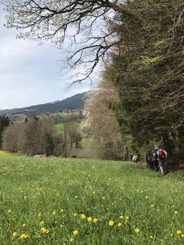 blühende Natur am Waldrand