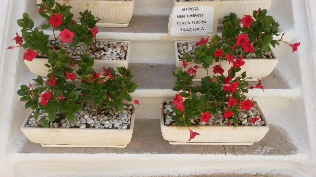 weisse Stadt Ostini, hübsche Blumenkistchen