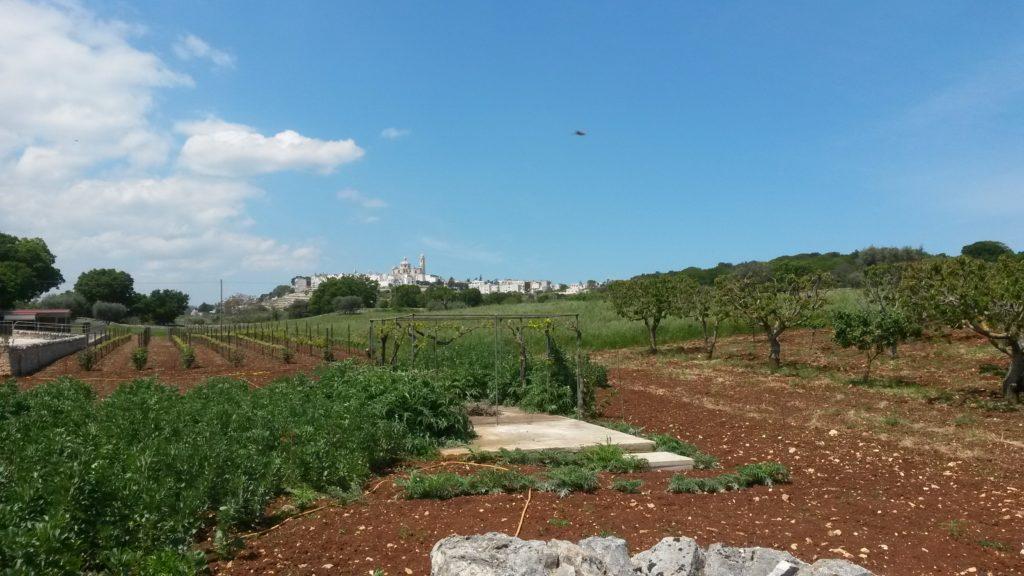 Masseria d'Aprile, Gartenanlage