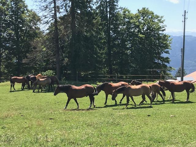 Pferdeweide im Berner Jura