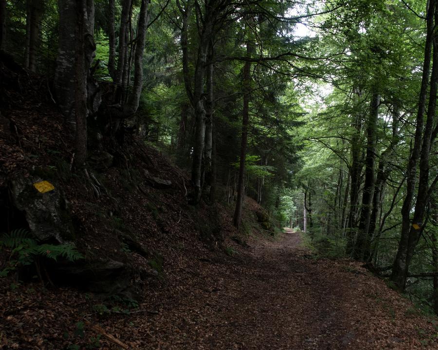 WALSA-Weg: Durch den Wald Richtung Mels