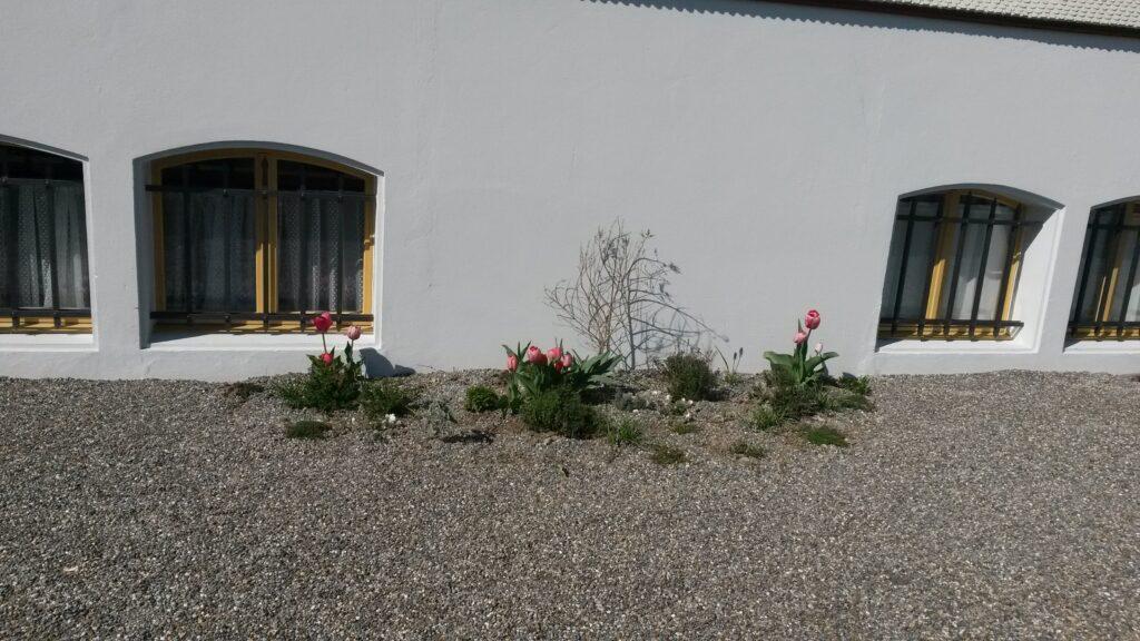 kleine Bepflanzung an der Kirchenmauer - 31.03.2020