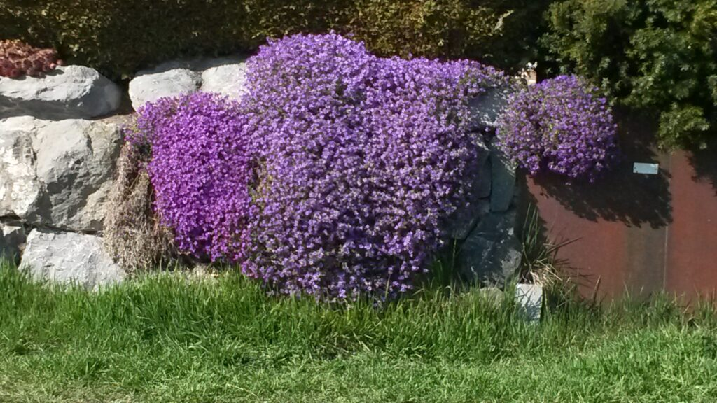 und noch ein Viola-Blumenkissen - 31.03.2020
