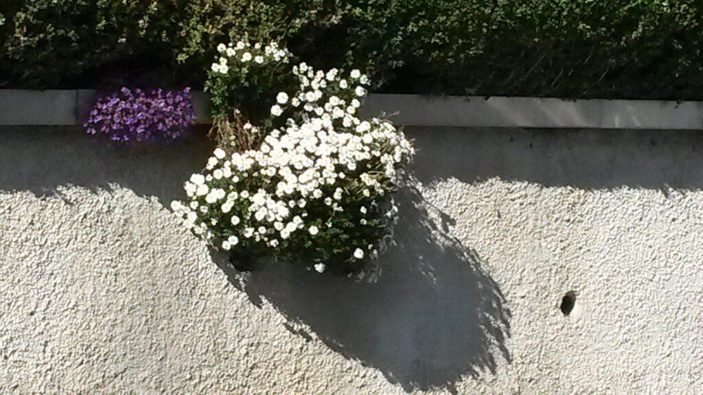 weisses Blumenkissen säumt die Quartierstrasse - 31.03.2020