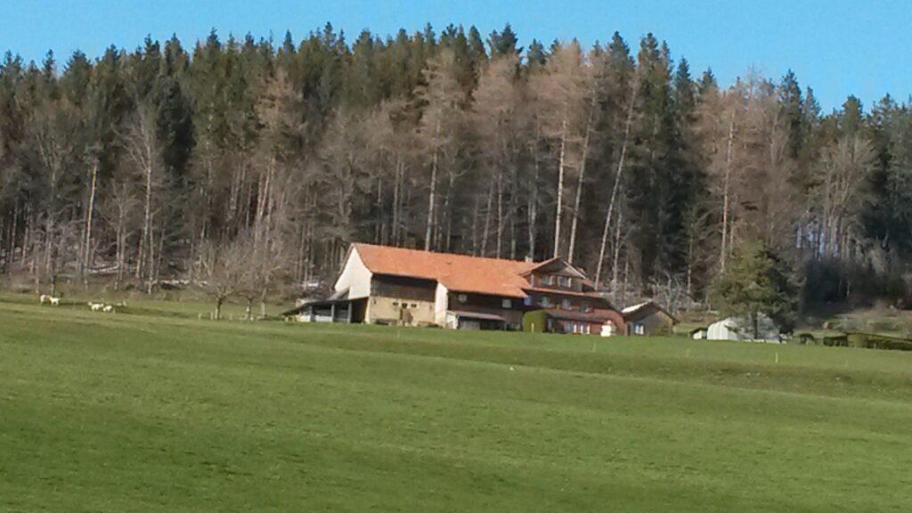 auf dem Aetschberg oberhalb Abtwil - 31.03.2020