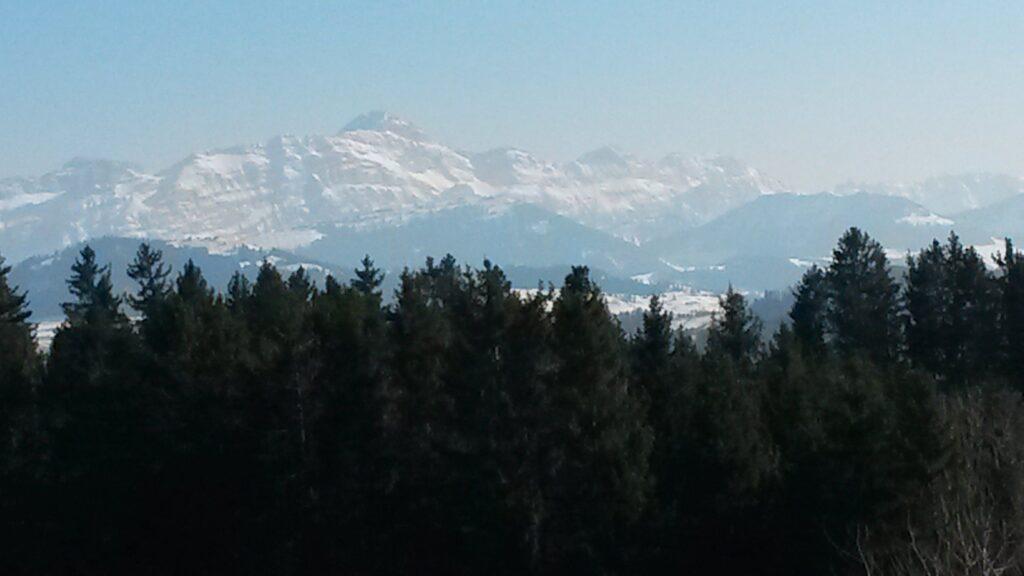 grüne Tannen und noch verschneite Bergwelt - 01.04.2020