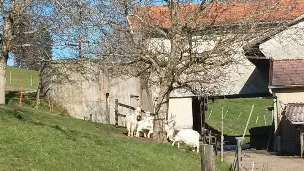 Bauernhof auf dem Aetschberg im noch strahlenden Sonnenschein - 01.04.2020