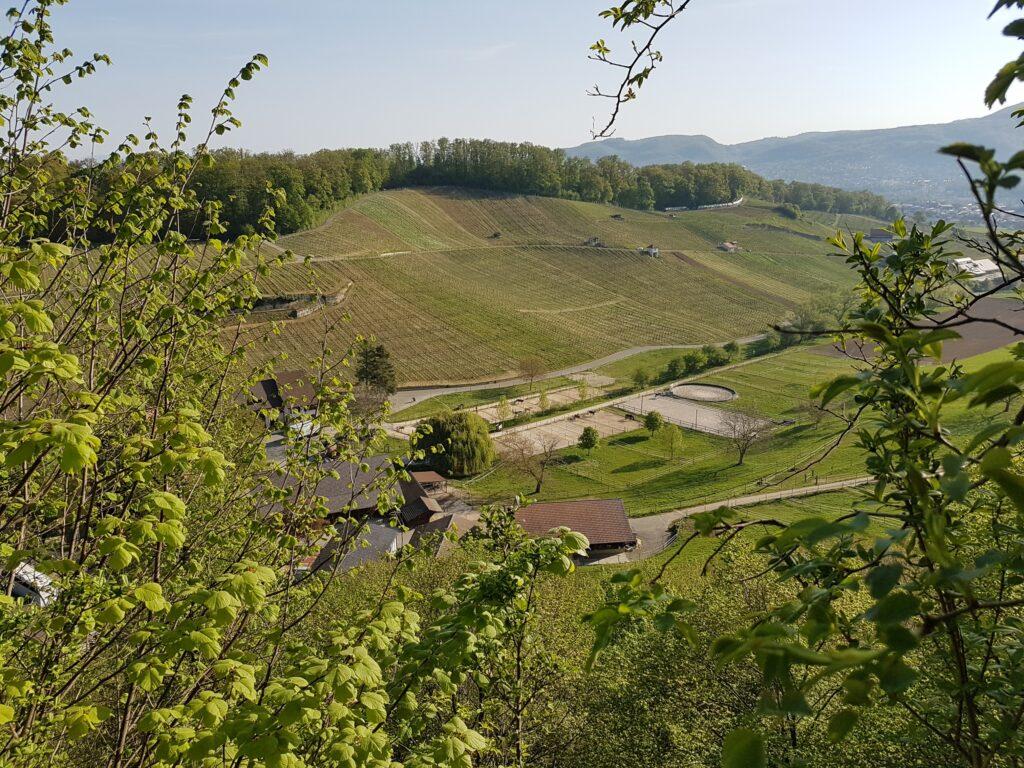 Rebberge der Gemeinde Aesch im Baselland - 19.04.2020