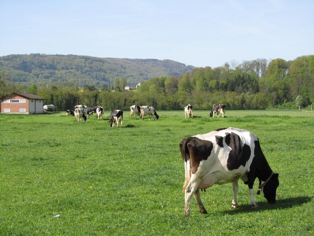 Bauernhof in Reinach - 11.04.2011