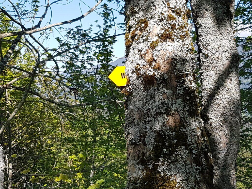 den Bäumen so nah auf dem Rämisgummenhoger, Erika - 21.05.2020