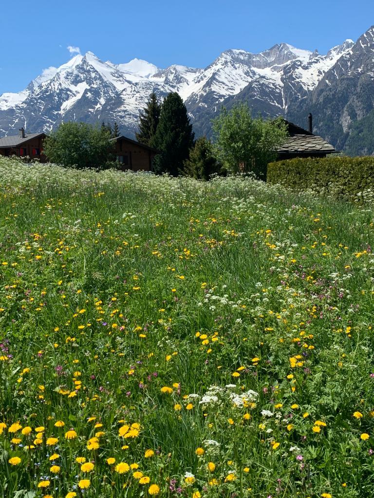 Gruss aus dem schönen Wallis, aus Grächen. Endlich wieder einmal Bergen, Blumen und herrliche Natur. Hat gut getan! Els -21.05.2020