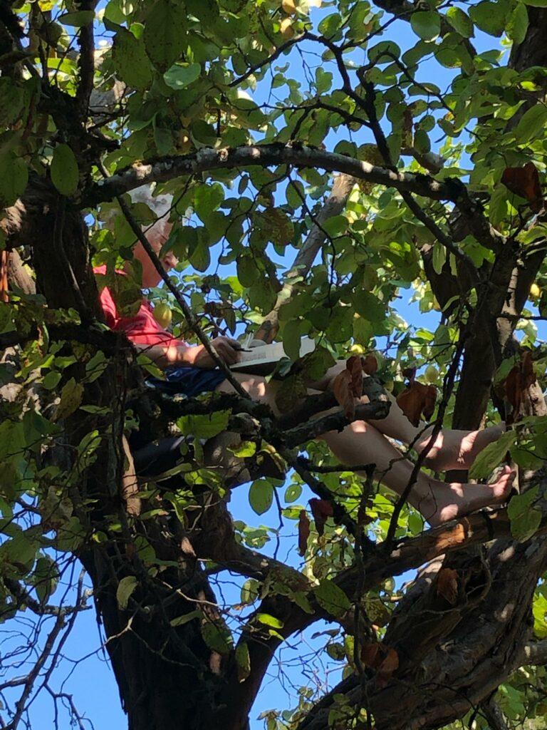 tägliches Ritual eines belesenen Pensionärs in den Baumzweigen in Romainmôtier