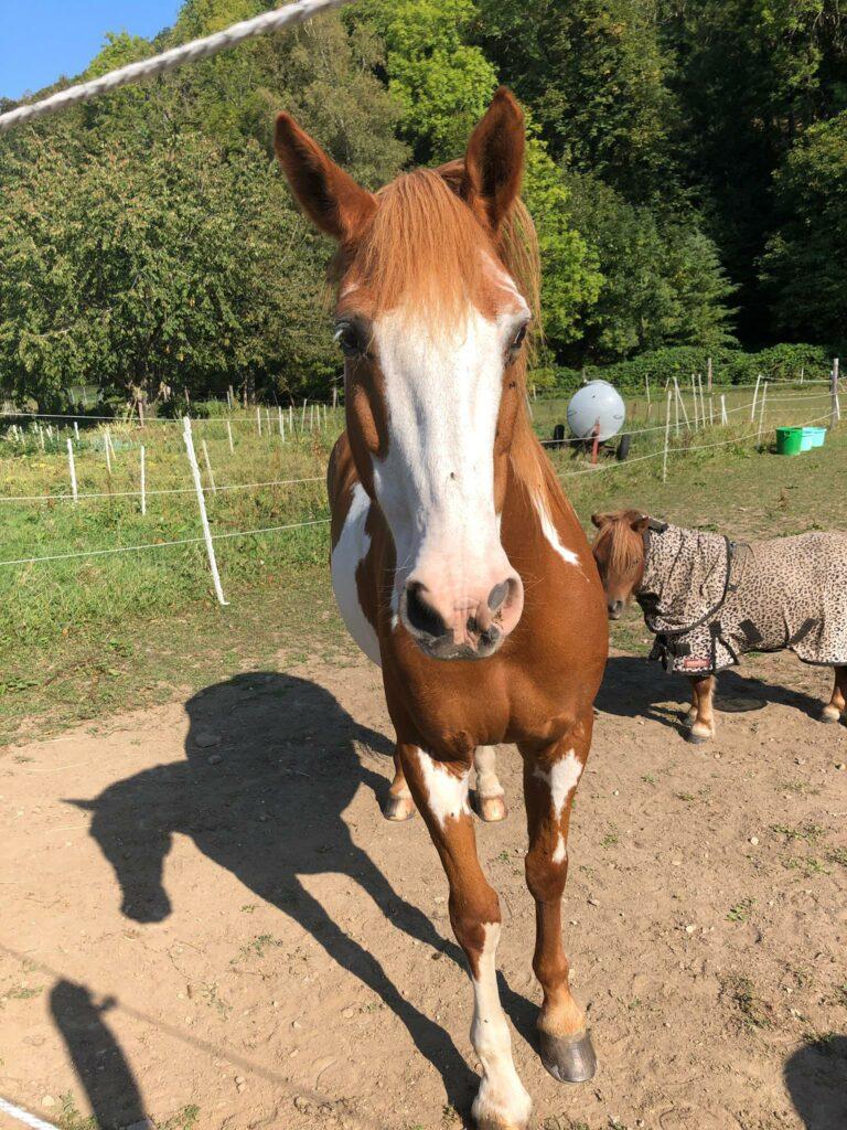 Pferde bei Romainmôtier