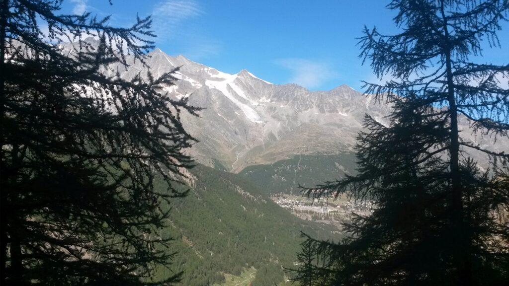 zwischen Tannen hindurch auf dem Erlebnisweg ab Furggstalden