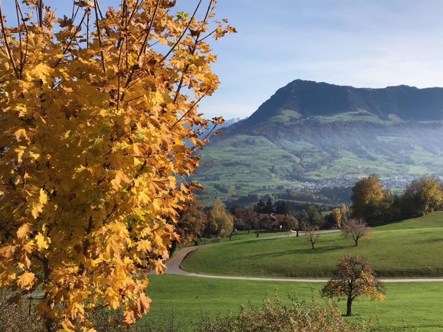 goldgelbe Blätter, die bald fallen werden.