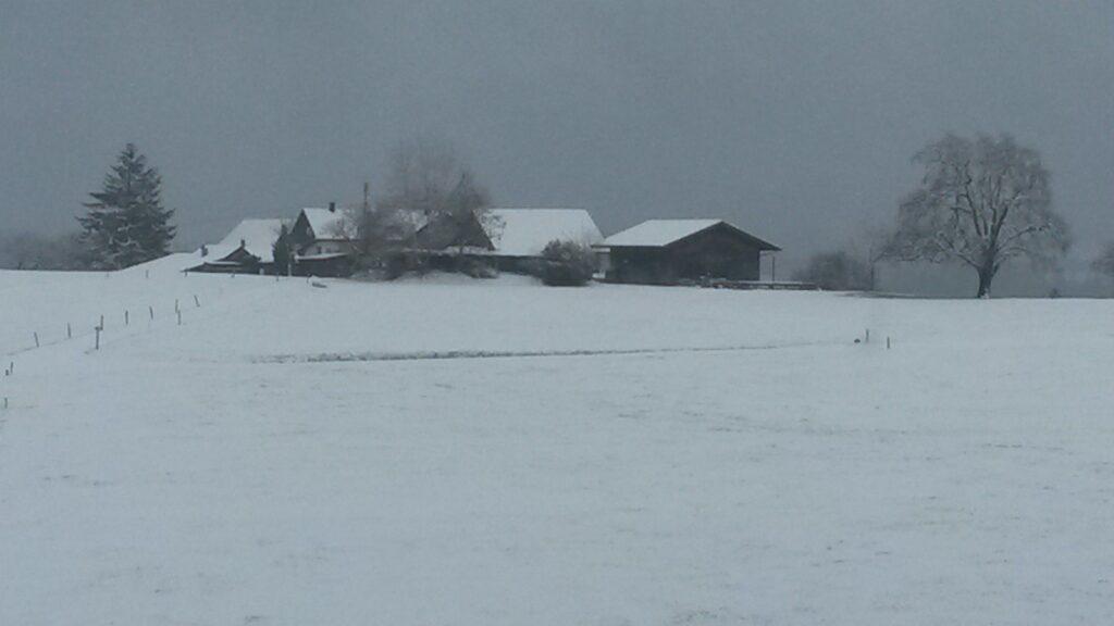 winterliches Hofleben - 01.12.2020