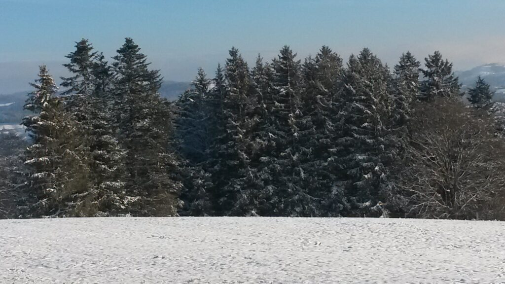 Schneefeld und Wald - 03.12.2020