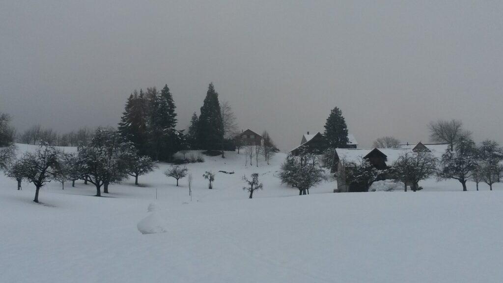 Boizenhof im Winterkleid - 07.12.2020