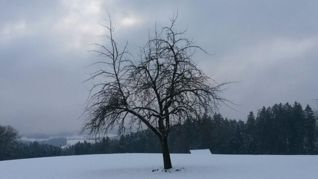 einsamer Baum in der Abenddämmerung - 07.12.2020