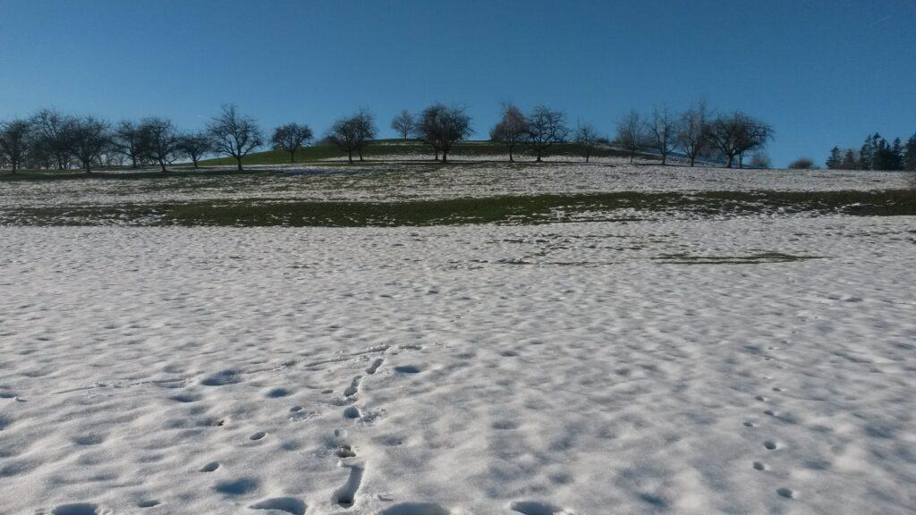 vorläufig letztes Schneefeld auf ca. 750 m - 16.12.2020