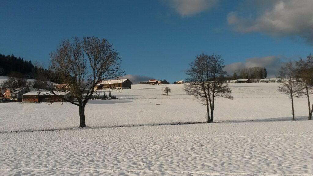 im sonnigen Schneefeld - 26.12.2020