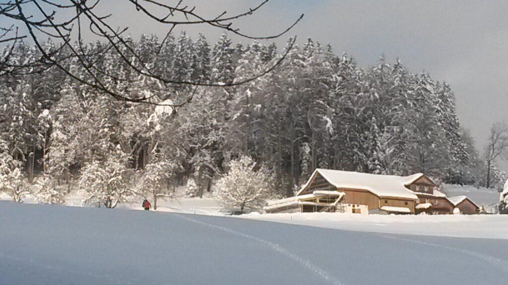 traumhaftes Wintermärchen - 16.01.2021
