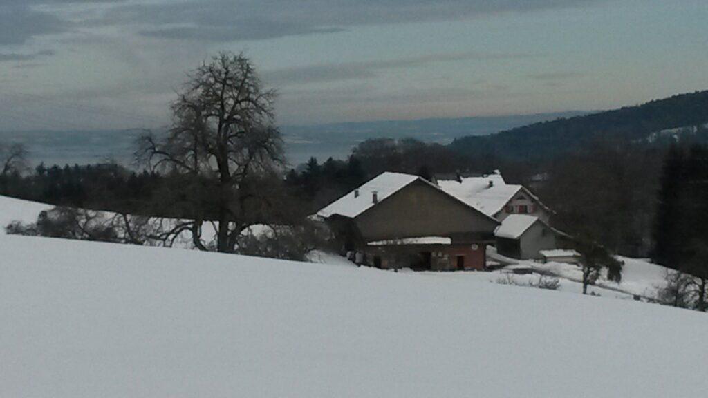 Ausblick zum Bodensee - 21.01.2021