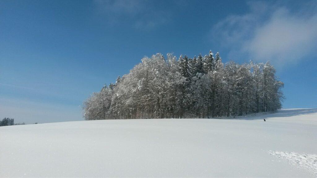 Schnee, soweit das Auge reicht. - 16.01.2021