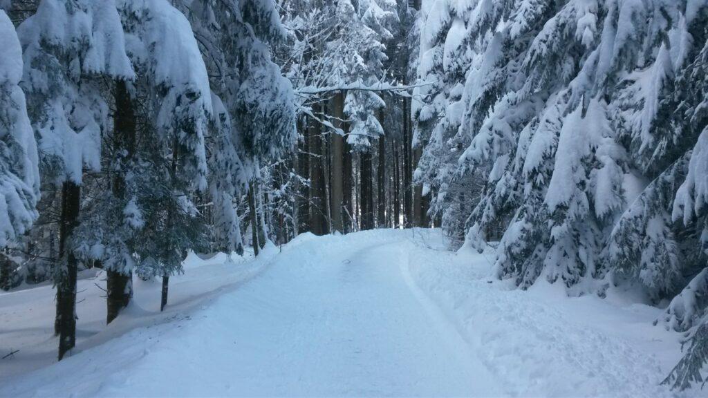 Winterwald - 16.01.2021
