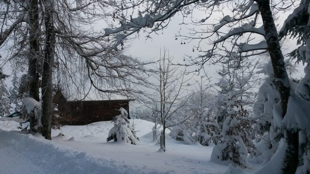 Winteridylle am Waldrand - 16.01.2021