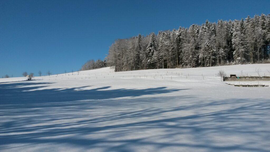 ein herrlicher Wintertag -  13.02.2021