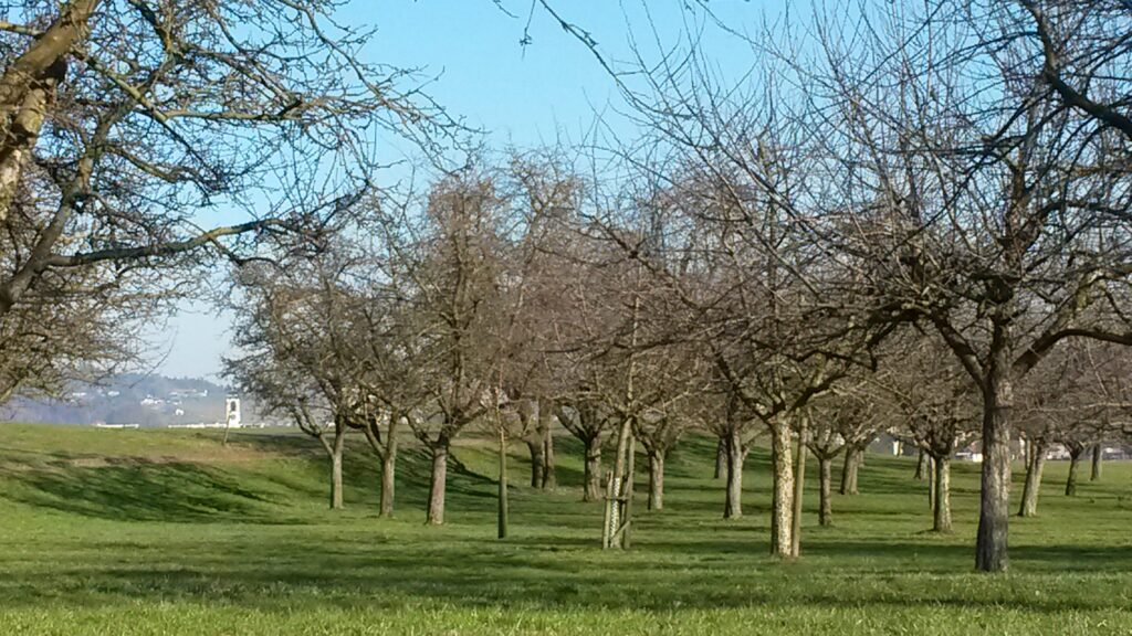 Spüren diese Apfelbäume schon bald den Frühling? - 21.02.2021