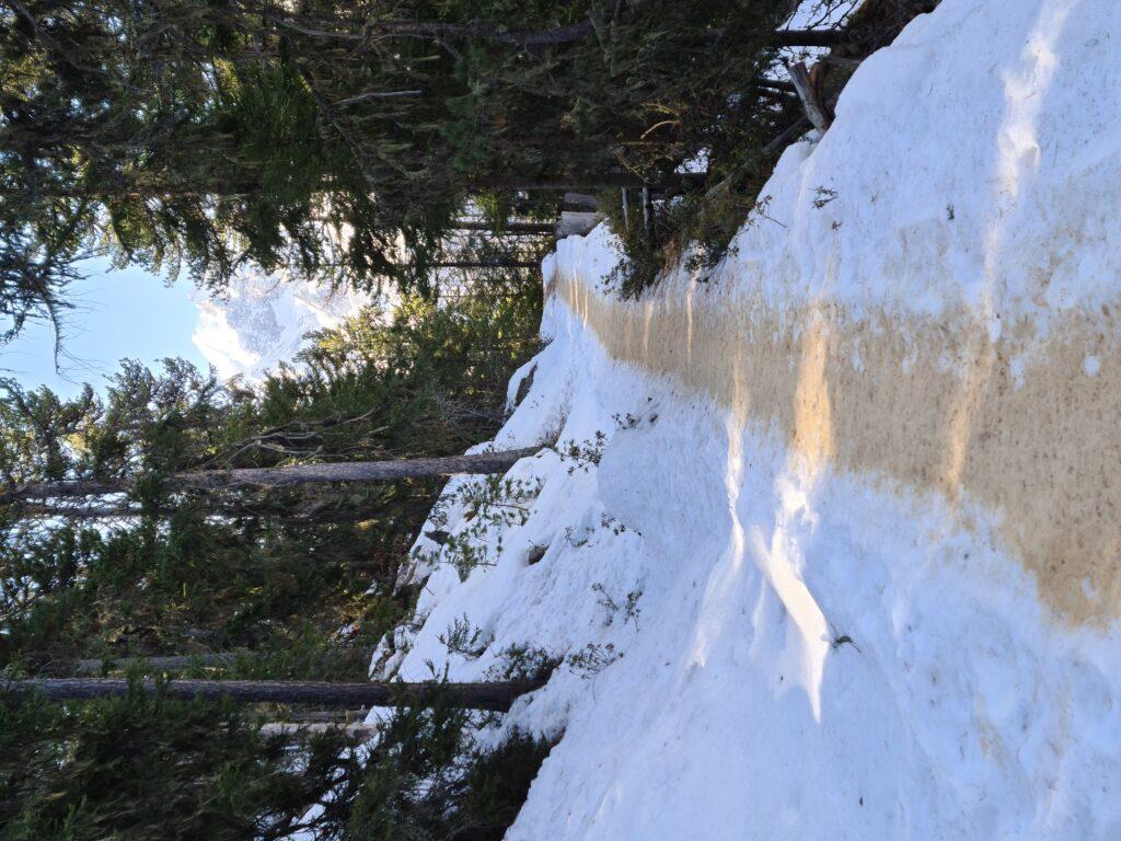 mit Holzspänen bestreuter Winterwanderweg in Grächen - Erika, 02.03.2021