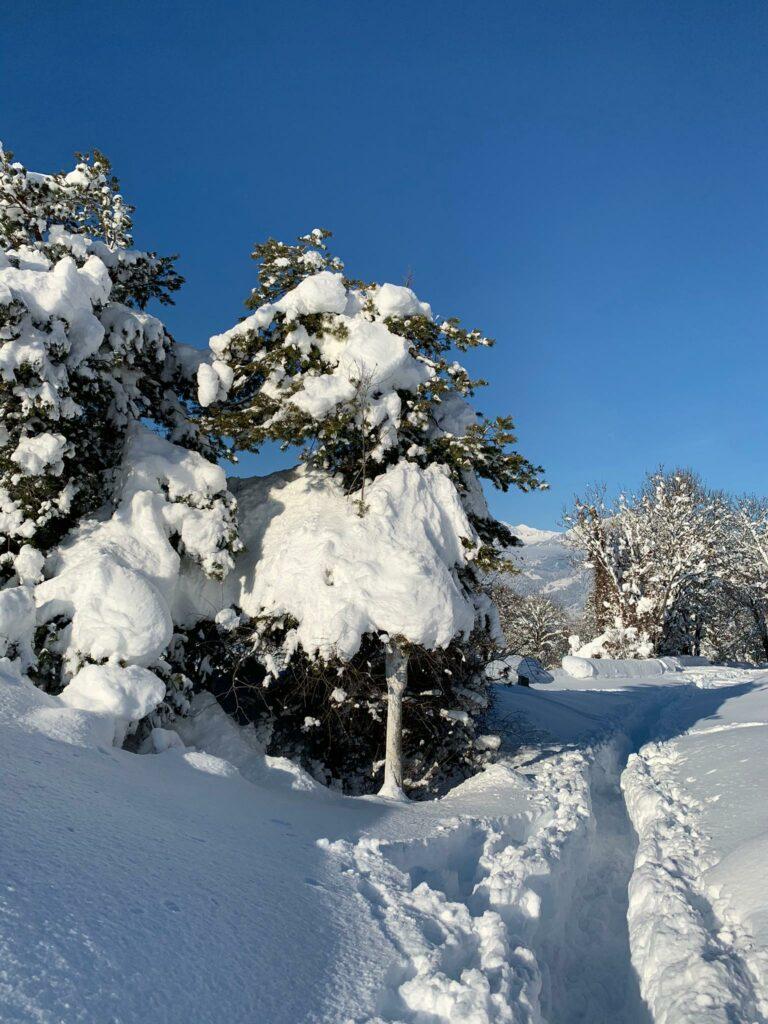 hübsch verschneite Tannen in Trimmis - Judith