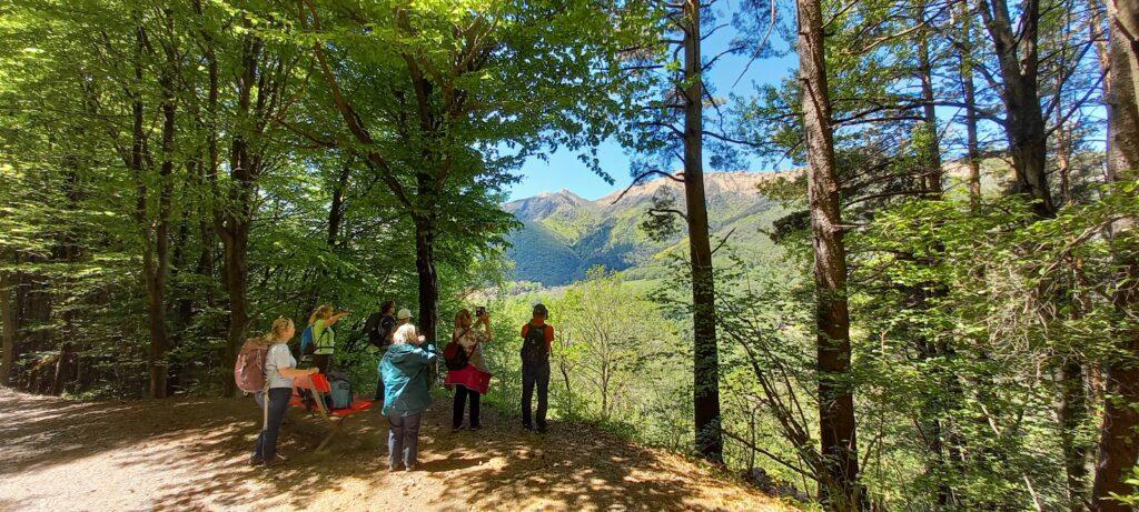 Ausblick in den bewaldeten Malcantone - 20.05.2021