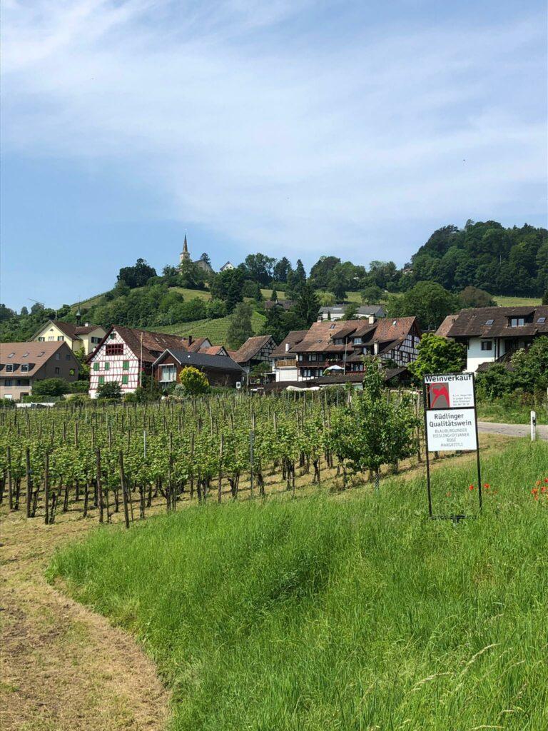 Rüdlingen, SH mit Kirche Buchberg im Hintergrund - 12.06.2021