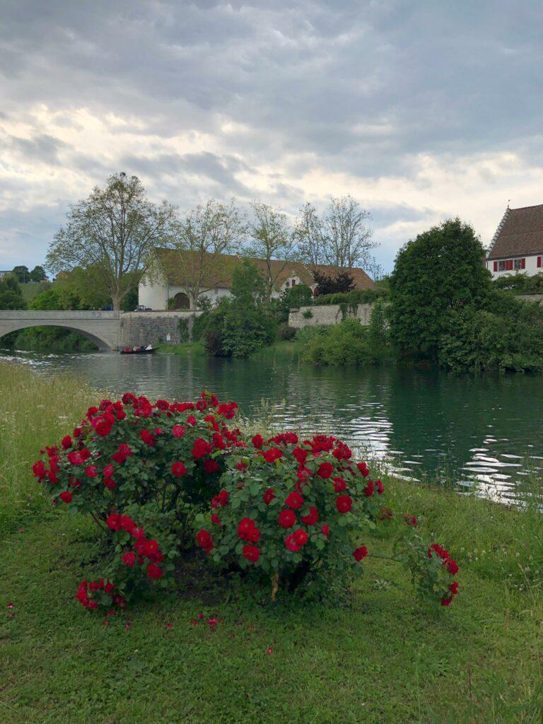 Klostergarten auf der Musikinsel Rheinau - 12.06.2021