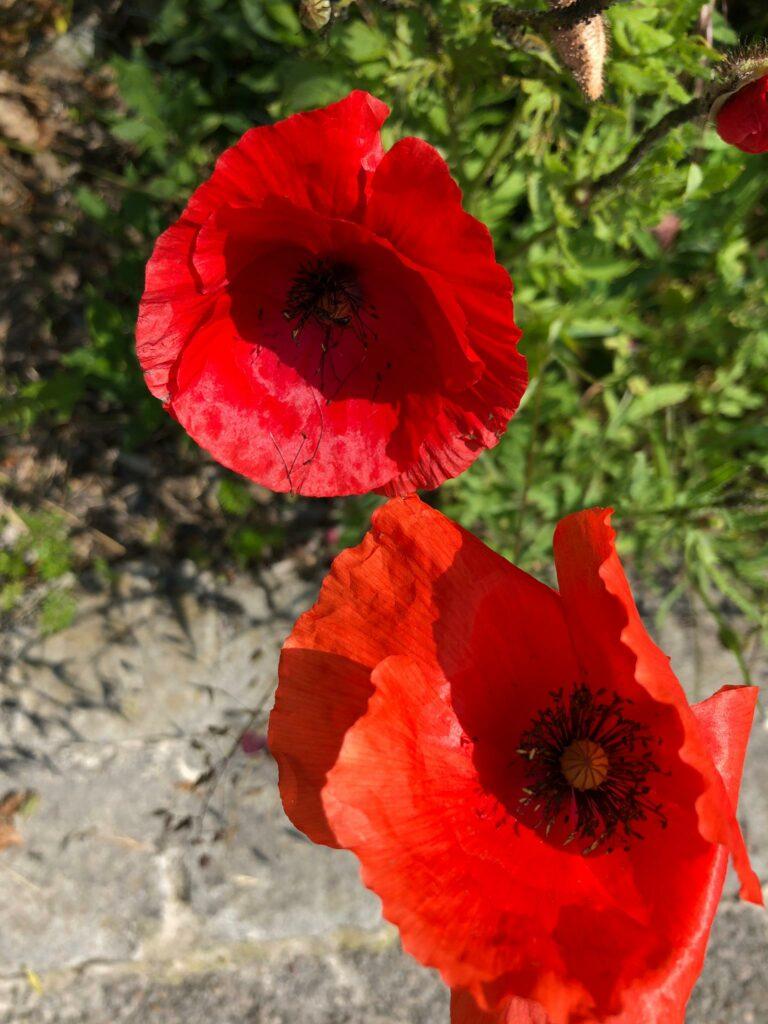 Blütenpracht - 12.06.2021