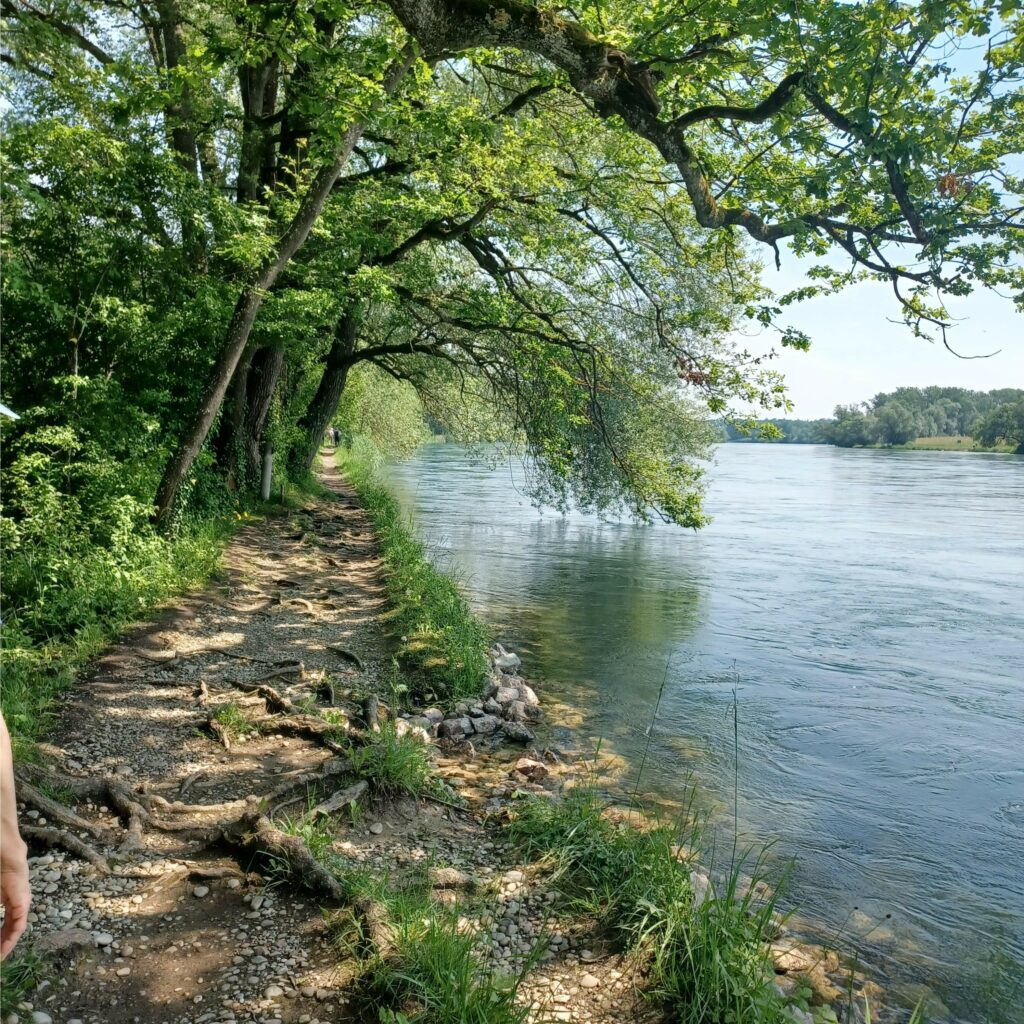 schattiger Naturweg direkt am deutschen Rheinufer - 12.06.2021