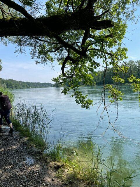 am deutschen Rheinufer Richtung Nack - 12.06.2021