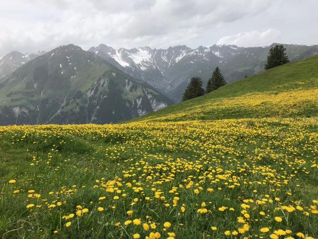 Bergfrühling auf der Alp Maton, 20.06.2021