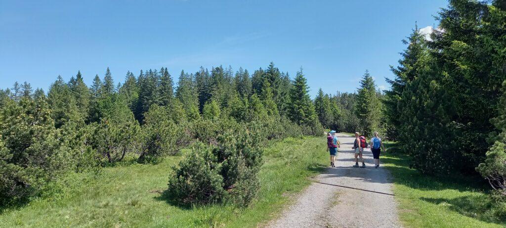 Wald in Sicht, 27.06.2021
