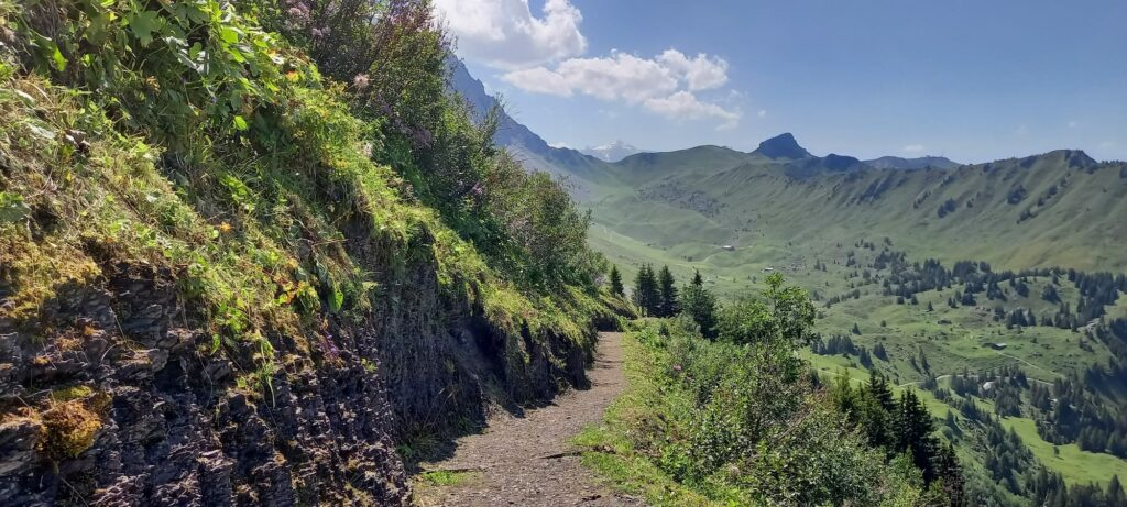 auf der Panoramawanderung Höchsthorn - Troneggrat - Bergläger - 14.08.2021