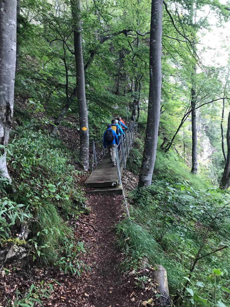 Aufstieg durch den Wald - 29.08.2021