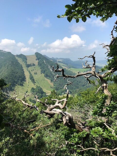 grüne Jurahügel Region Passwang - 20.07.2021