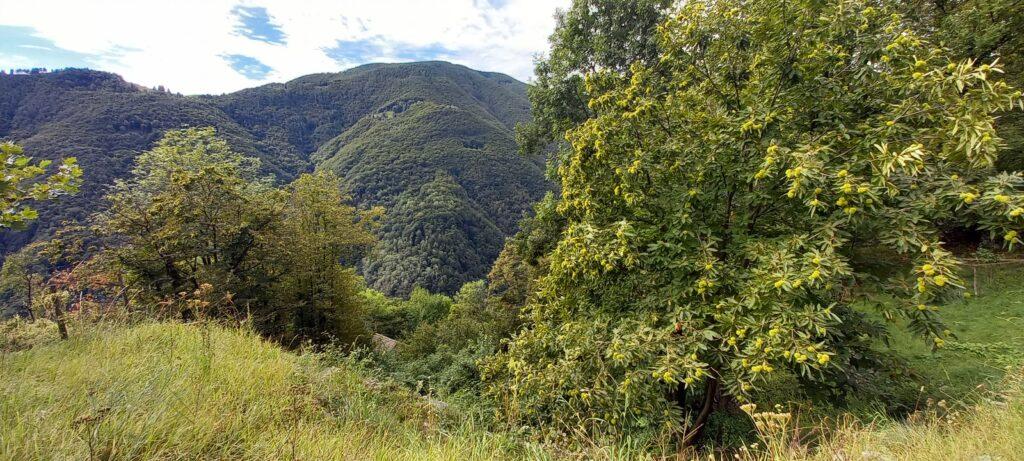 Rundwanderung im wildromantischen Onsernonetal -  20.09.2021