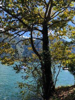 Spätsommerliche Stimmung am Lago di Lugano - 21.09.2021